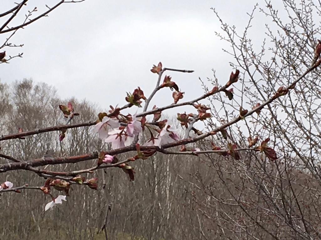 やっと春が・・・