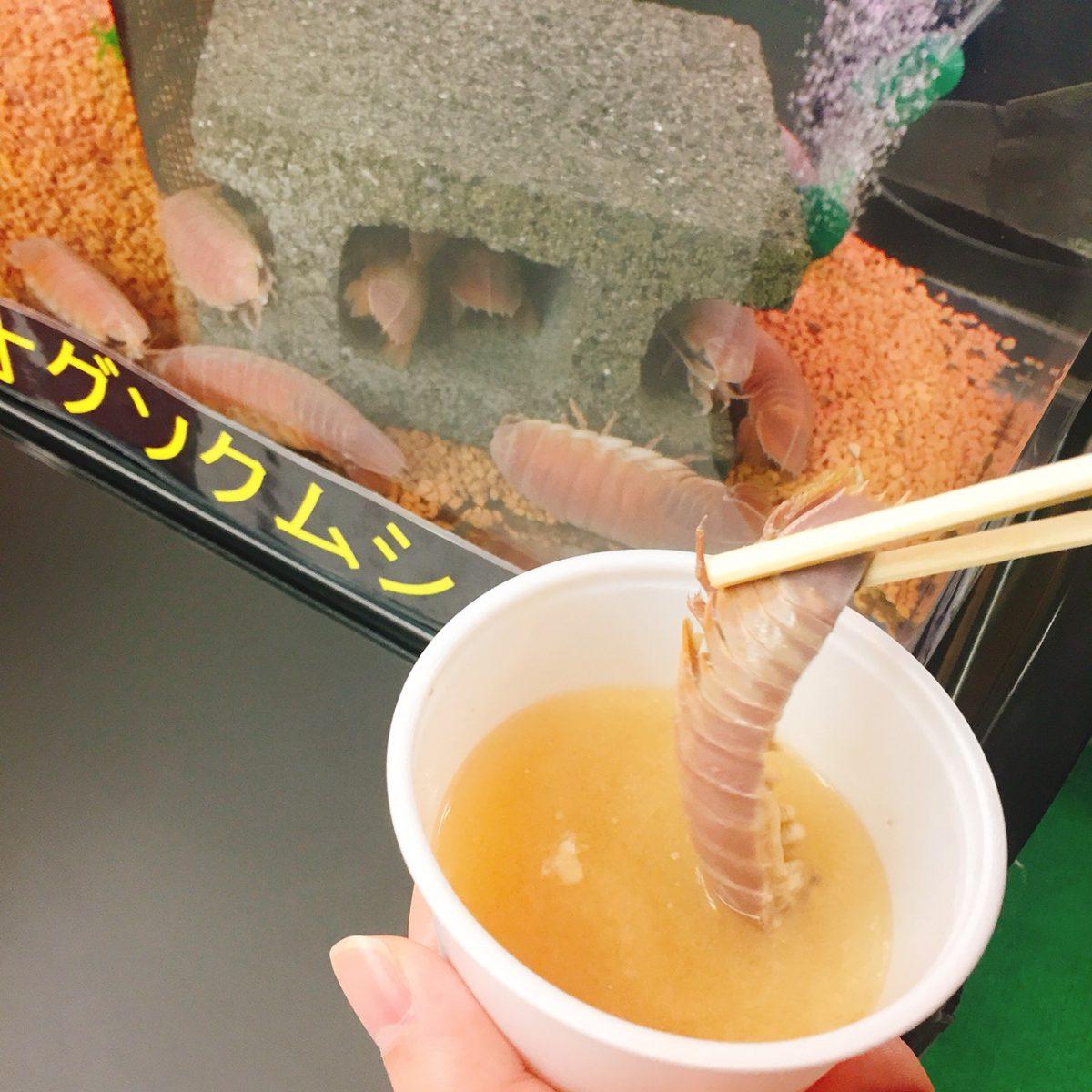 静岡観光地めぐりー!