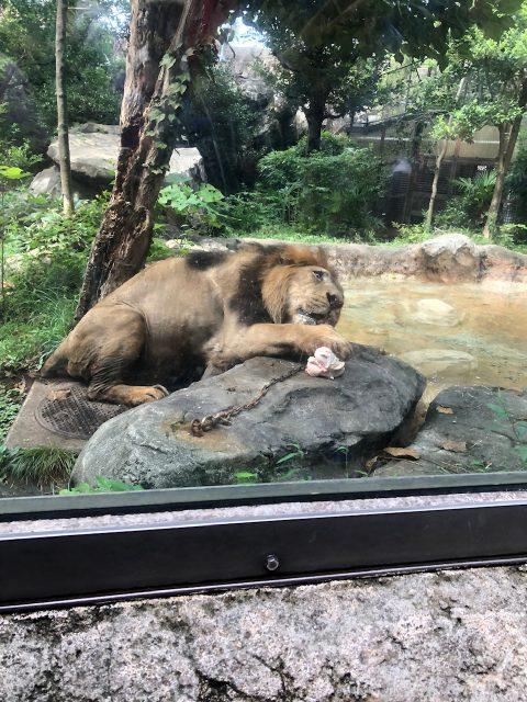 上野動物園に行ってきました