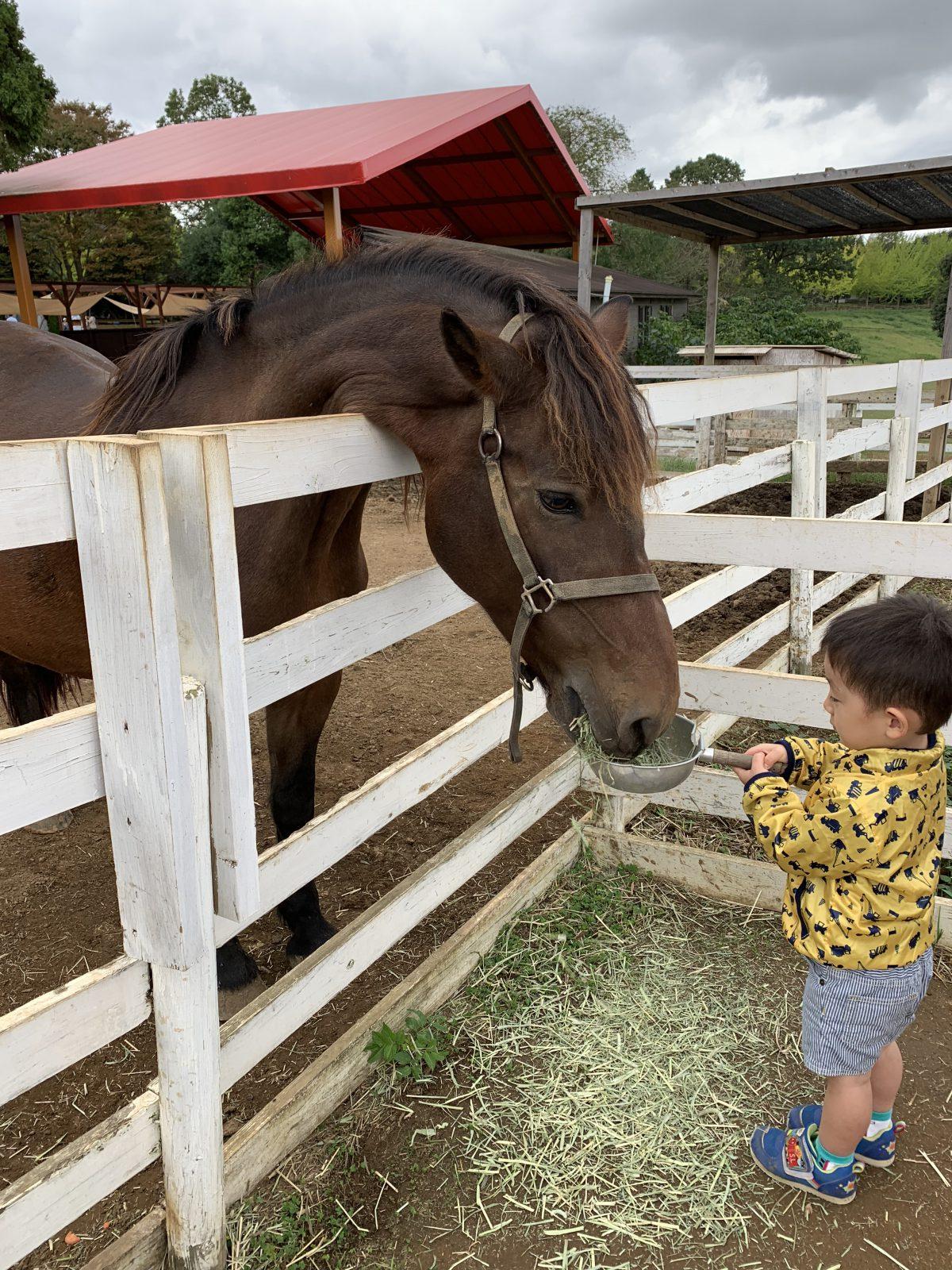 馬のエサやり